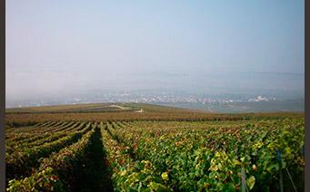 Vigne - Richard Dailly - œnotourisme Itinéraire Y - Trajectoire Vin